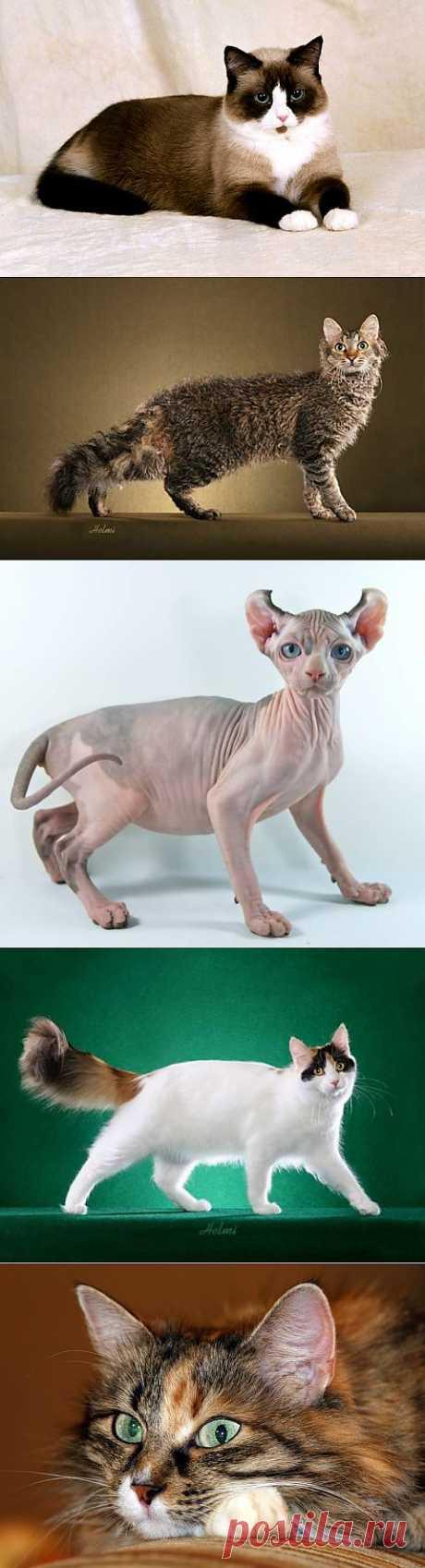 (+1) тема - Самые редкие породы кошек в мире | Четвероногий юмор