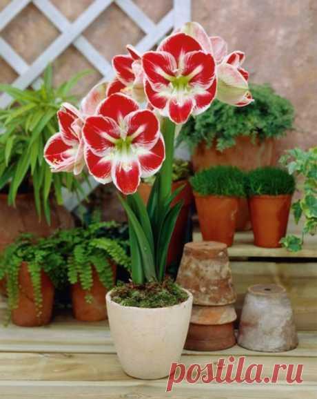 Подборка секретов роскошного комнатного цветника