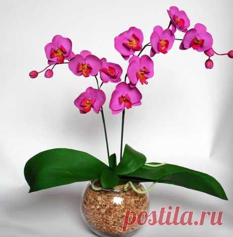Орхидея фаленопсис: уход, болезни, виды, размножение - archidea.com.ua