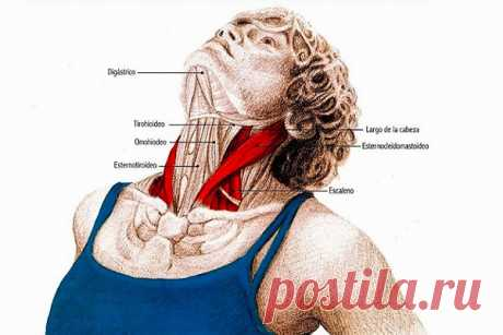 5 упражнений для шеи: Нормализуют давление и освобождают от зажимов