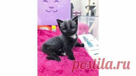 Крошка Енот: история спасения котенка с уникальным окрасом - Питомцы Mail.ru
