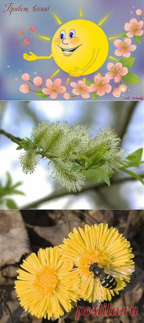 Как определить сроки посадки растений на даче   Самоцветик