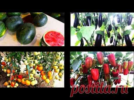 Природное земледелие на практике  РЕЗУЛЬТАТЫ - YouTube