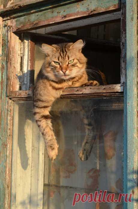 Котик в форточке & Кошки на окнах & Фото | МУРЧИМ.РФ