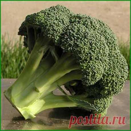 Купить семена капусты брокколи оптом | Айронмен F1  (Ironman) 20 штук. Низкая цена на семена капусты брокколи