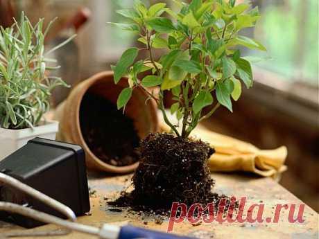 Десять золотых правил выращивания растений | НА ЗАВАЛИНКЕ