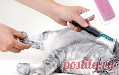 Уход за шерстью кошки | PetTips