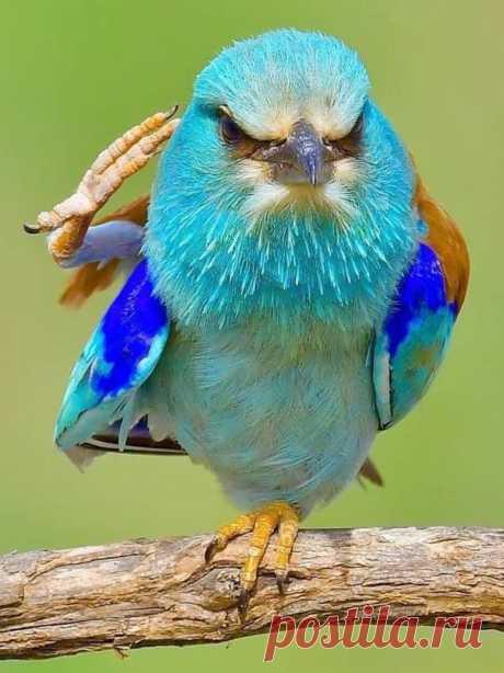 flying of birds Source:flying of birds. मेरी नज़र से दुनिया को देखो
