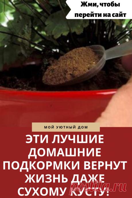 Лучшие домашние подкормки для растений
