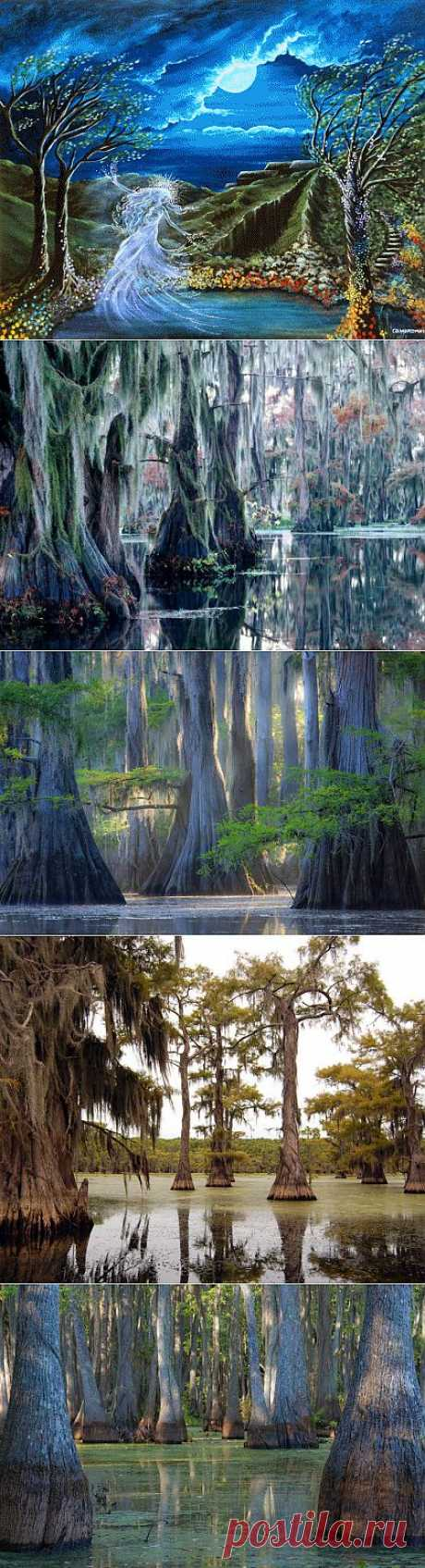 Удивительное озеро сказочных кипарисов!