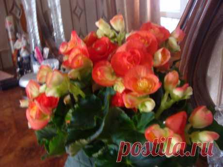 Мои комнатные цветы