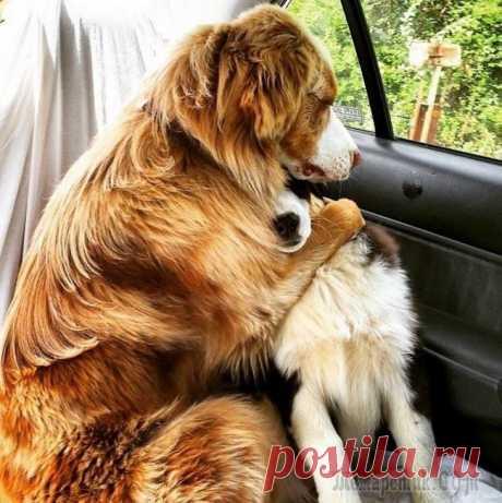 20 собак, ради которых стоит заходить в интернет Забавные животные — это лучшее, что случилось с Интернетом за всю его историю, и надо от всей души поблагодарить их владельцев за то, что они успевают запечатлеть и поделиться в сети самыми смешными с...