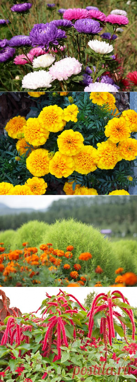 15 цветочных культур, которые нужно посеять на рассаду в апреле / рассада / 7dach.ru
