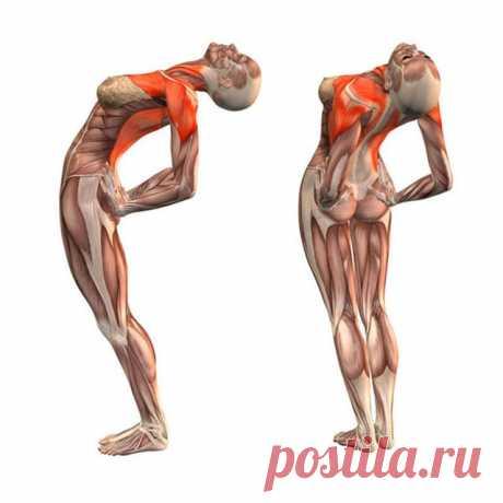 Эти упражнения улучшают кровоснабжение мозга, выпрямляют позвоночник, освобождает сосуды от зажимов ~ Шкатулка рецептов