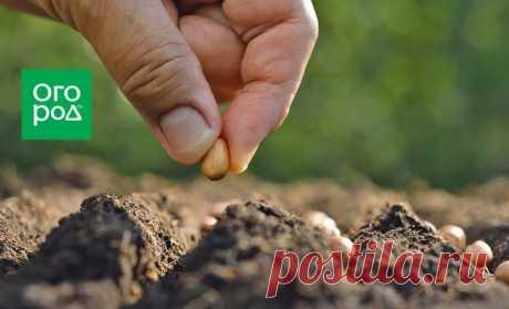 Субстраты для посева семян и выращивания рассады – какой лучше? | На грядке (Огород.ru)