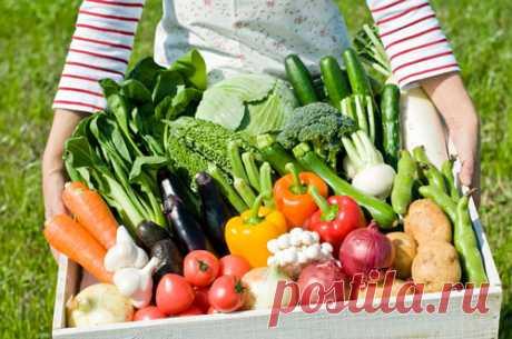 После применения биоудобрения «AgroMax» на дачном участке не знали, куда девать овощи. Урожайность повысилась в разы! Простой способ использования