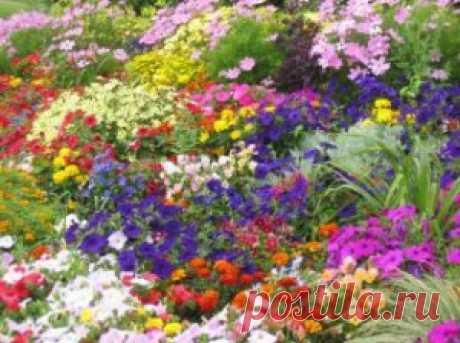 Сроки цветения цветов.   Для дачников.ру