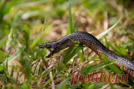 Дачные кошмары: куда бежать ичто делать, если научастке завелись змеи | REALTY.TUT.BY