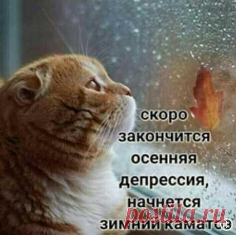 El gatito rojo