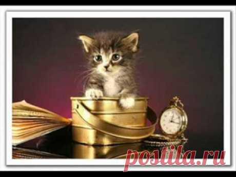 Милая песня про кошек)))).flv