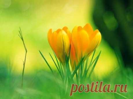 Позитивные аффирмации для здоровья, удачи и любви / Мистика