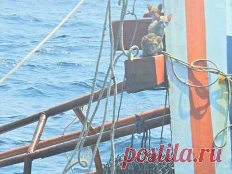 На днях у северного побережья острова Ка Данга, провинция Сатун, Таиланд, на рыболовном судне Bamon Sin Nava начался пожар, в результате которого судно было сильно повреждено и начало тонуть. На корабле находилось в общей сложности 8 членов экипажа, из них 3 гражданина Таиланда и 5 граждан Мьянмы, и как потом оказалось ещё 4 кошки.