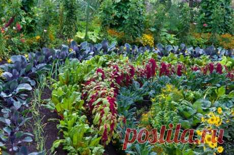 Красивый огород: идеи оформления грядок. Фото