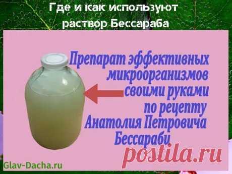Раствор Бессараба - как приготовить микробный эликсир, рецепт