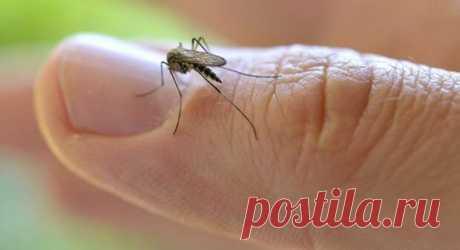 8 убийственных ароматов против комаров. Актуально, как никогда. | Страна Полезных Советов
