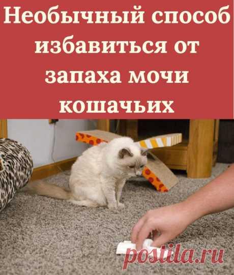 Необычный способ избавиться от запаха мочи кошачьих