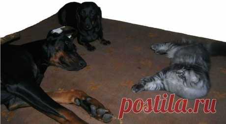 Кошка и собака очень разные... Но в вопросе о том, как использовать хозяйскую кровать, они абсолютно солидарны друг с другом))