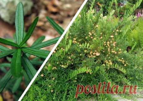 Лучшие теневыносливые кустарники для вашего сада | Валентина Мусагитова | Яндекс Дзен