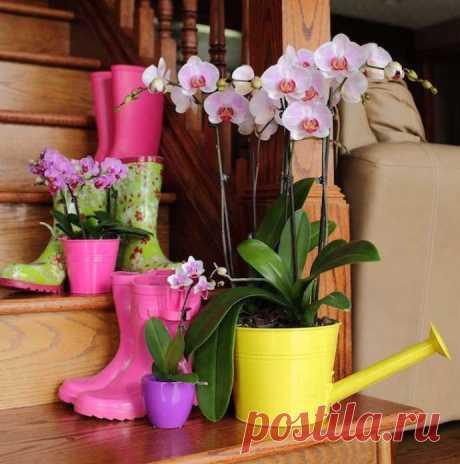 Особенности полива орхидей зимой и на этапе цветения Комнатные орхидеи с каждым годом становятся популярнее у цветоводов нашей страны. Наиболее часто новички в цветоводстве даже при условии правильного подбора сорта цветущей орхидеи не всегда знают осно...