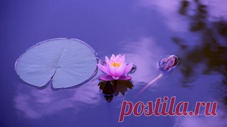 Приятный парадокс: медитация высвобождает больше времени, чем занимает. Вот несколько простых способов помедитировать.