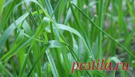 ¿Cómo librarse de la grama sin química? | 6 sotok