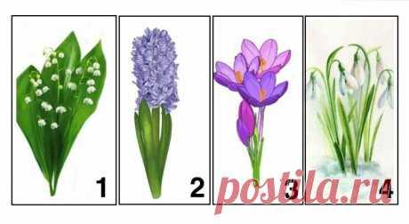 Психологический тест для женщин: выберите цветок и узнайте, чего вам не хватает в данный момент | Haip.info | Яндекс Дзен