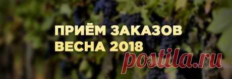 Саженцы роз - Купить саженцы оптом и в розницу с доставкой по всей России