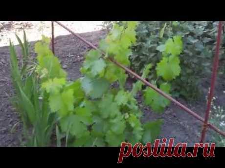 Опора для винограда своими руками)
