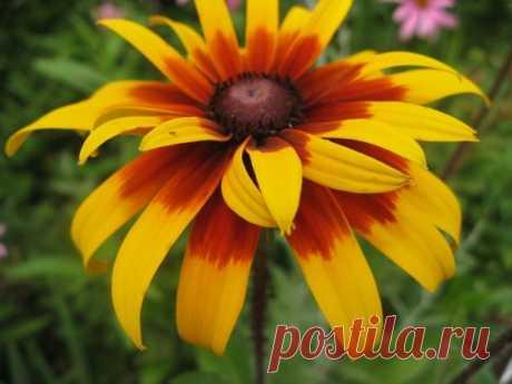 56 Красивых летних цветов, которые преобразят ваш экстерьер и сад | Надежда Солодовникова | Яндекс Дзен