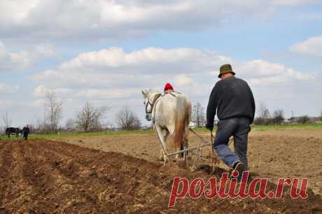 From a plow to the computer: traditions and innovations in agriculture.\u000d\u000a\u000d\u000aTraditionally work of the farmer consisted in plowing (or to dig up) the earth, to fertilize it and to sow seeds. Then — to weed and loosen, and till fall — to reap a crop. Also it would seem what here still can be thought up — it was so from olden days moved, so our ancestors did … But the modern person is inquisitive and inclined to search of new ways, and therefore now there are many alternative methods of agriculture.