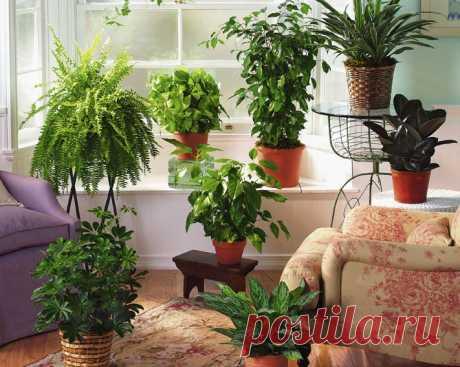 Энергетика комнатных растений: защита дома.