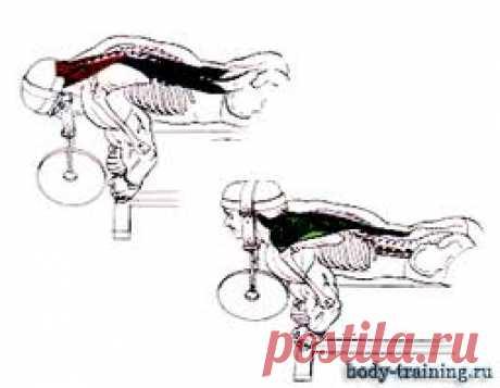 Упражнения для мышц шеи. / Комплексы. Упражнения. Картинки.