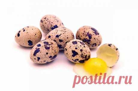 Польза и вред перепелиных яиц