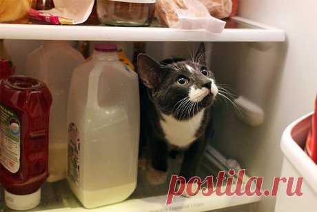 10 самых опасных продуктов для кошек! » Женский Мир