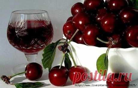 Вино из вишни - одно из самых вкусных домашних вин (много рецептов)