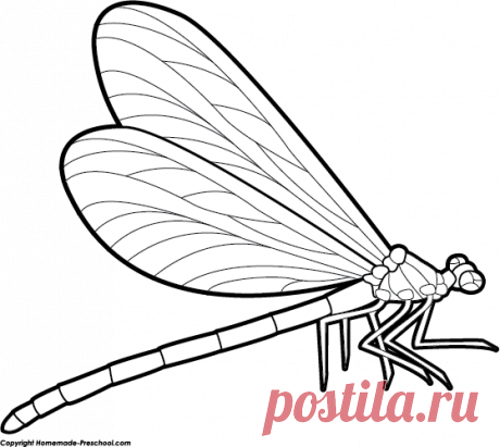 dragonfly cut out template – Google Поиск