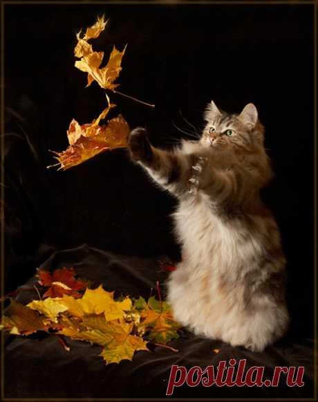 О котах и кошках - понемножку...