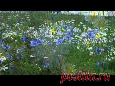 ▶ релакс Шопен красивая, успокаивающая музыка - YouTube