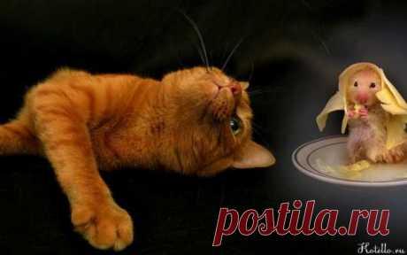 Как кошку перевести с сухого корма на домашнюю еду