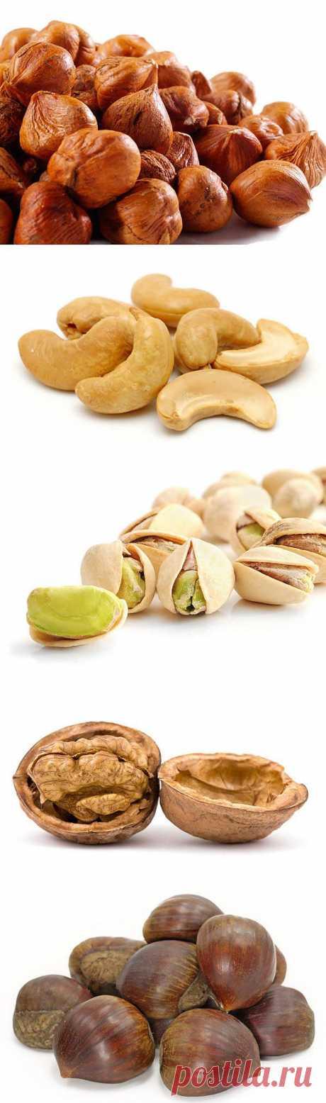 Полезные орехи и их свойства.